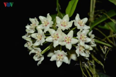 Chiêm ngưỡng vẻ đẹp rực rỡ của hoa cẩm cù ở xứ Huế 157
