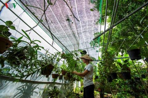 Anh Phú chia sẻ, hiện khu vườn 2000m2 nhà anh trồng đủ các loại cây từ cây ăn quả, rau củ, cây cảnh đến các loại hoa như hoa Cẩm cù – Hoya, hồng ngoại, lan rừng, xương rồng, sen đá, râu hùm, các loại quỳnh, diên vĩ, địa lan, môn thiên nga tím, bụp lồng đèn, huệ thái, mộc lan, râm bụt hay một số cây phục vụ công trình,…