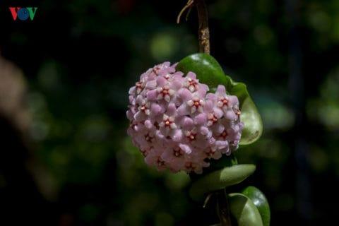 Mỗi loại hoa mang trong mình một hương thơm rất ấn tượng, riêng biệt.....