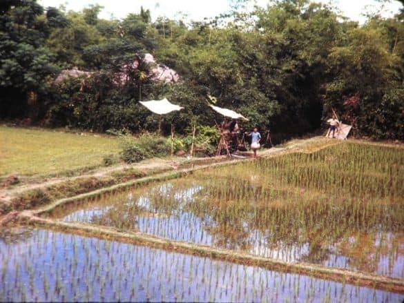 Ruộng đồng và vườn tược ở ngoại ô của Huế.