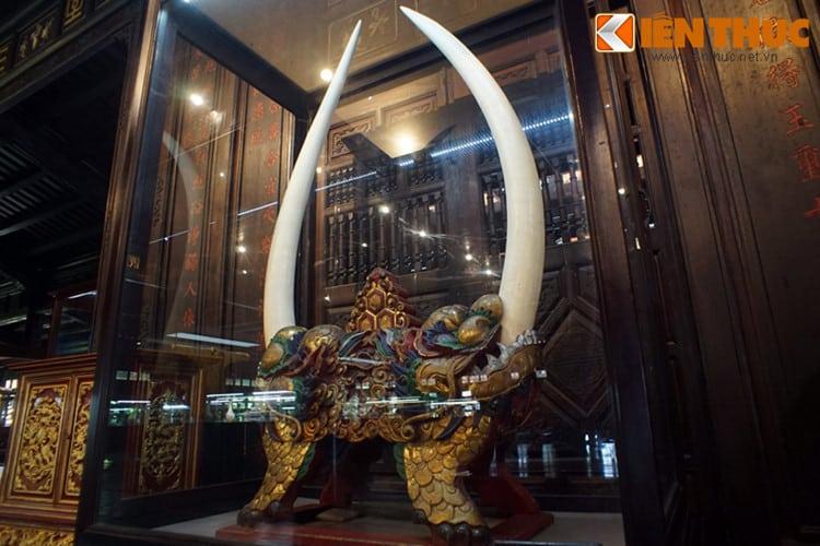Chiêm ngưỡng những bộ ngà voi khủng nhất Việt Nam 137