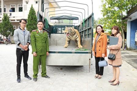 Thừa Thiên Huế: Chuyển giao bộ da hổ cho Bảo tàng thiên nhiên duyên hải miền Trung