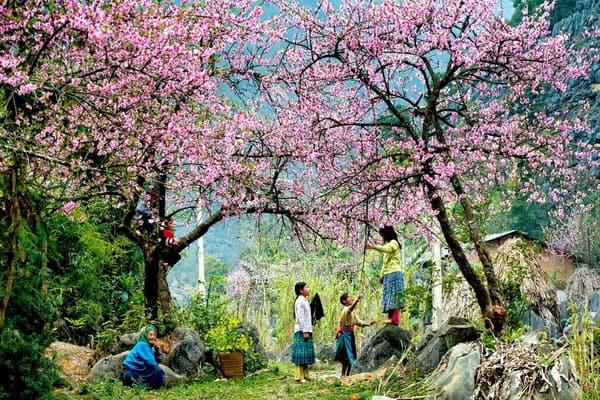 Top những điểm du lịch hấp dẫn nhất Việt Nam dịp Tết Nguyên đán 2019 122