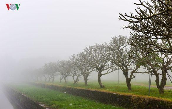 Hàng cây sứ trước mặt kinh thành Huế trong sương.