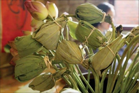 """Hoa """"trà sen"""". Ảnh: Trung Phan"""