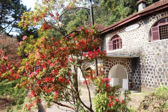 Một cây đổ quyên rực hoa đỏ bên ngôi biệt thự cổ trên đỉnh Bạch Mã