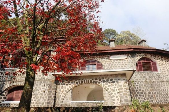 Cây phong lá đỏ bên biệt thự cổ