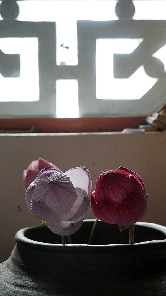 hoa giay thanh tien