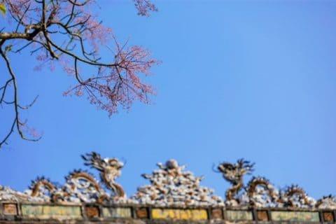 Hoa ngô đồng đẹp ngỡ ngàng trong Đại Nội Huế 139