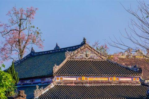 Cung điện vua Nguyễn ở cố đô Huế và những cây hoa ngô đồng cực đẹp