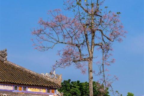 Thân cây ngô đồng vươn lên thẳng tắp giữa trời xanh