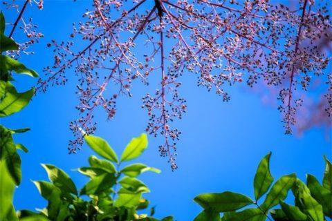 Những chùm hoa đẹp đến độ có thể làm xao xuyến bất cứ 1 tao nhân mặc khách nào