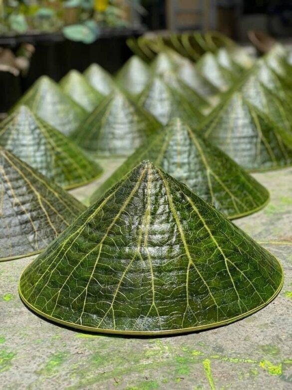 Nón lá sen là sản phẩm nổi bật của hoạ sỹ Nguyễn Thanh Thảo. (Ảnh: Mai Trang/TTXVN)
