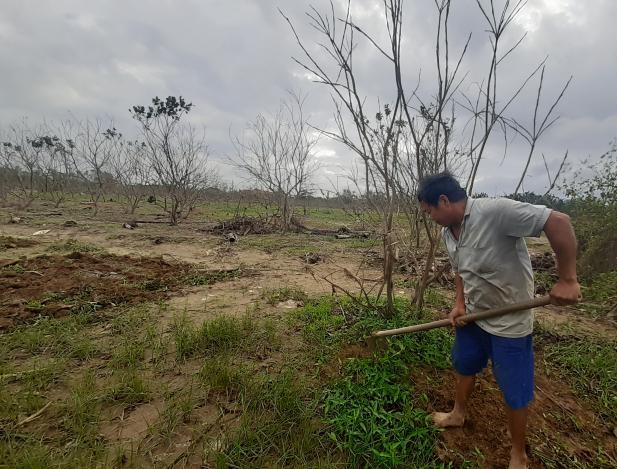 Thừa Thiên- Huế: Nỗ lực cứu vườn cây đặc sản