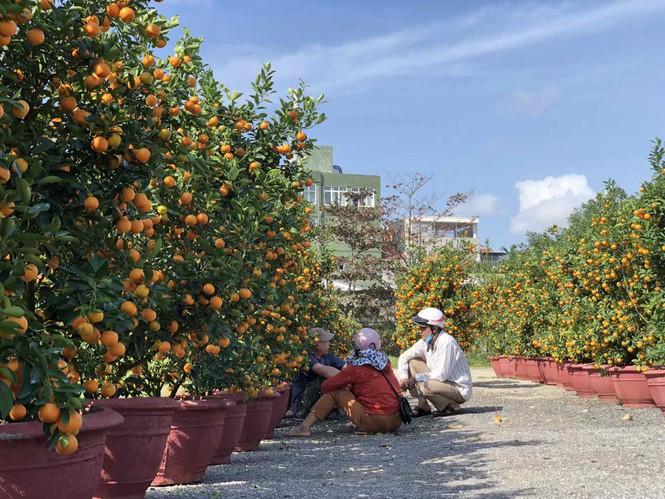 Chợ hoa Tết xứ Huế 'nóng lòng' chờ khách mua 160